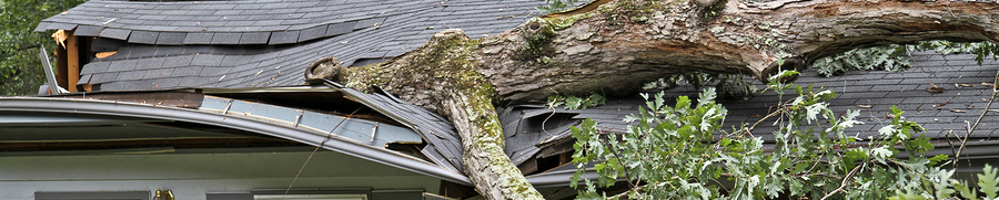 summer storm with tree through roof
