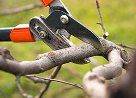 a branch being trimmed