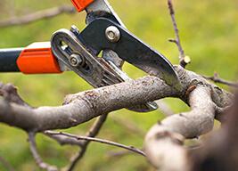 trim branches back toledo roofer